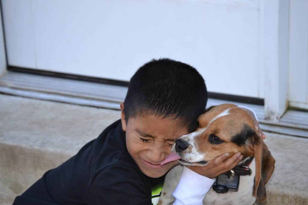So our darling beagle loves to attack our son.  They have a really antagonistic relationship.  He always tells me she is the best Christmas present that Santa ever brought him.  LOL!
